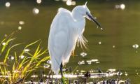 Evenement Berzy le Sec Les oiseaux d'eau