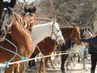 Foire-aux-chevaux Fontvieille