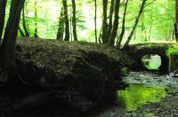Idée de Sortie Pouru Saint Remy Le Bois des Douze-Cent, la Nature aux mille merveilles !