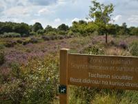 Idée de Sortie Glomel Réserve Naturelle des Landes de Lan Bern