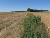 Idée de Sortie La Chapelle Grésignac Plaines agricoles du Verteillacois