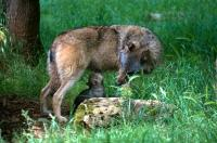 Idée de Sortie Gramat Parc Animalier de Gramat