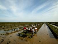 Evenement Saint Laurent sur Mer Visite des parcs à huîtres Le goût de la Normandie