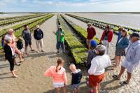 Evenement Saint Laurent sur Mer Visite Parcs à huitres L'autre goût de la Normandie