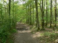 Idée de Sortie Saint Laurent de Condel Forêt de Grimbosq