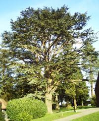 Arboretum d´Harcourt Eure
