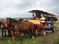 Evenement Mandeville en Bessin Balade en attelage Les marais de l'Elle, au rythme des chevaux