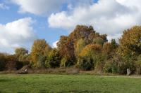 Parc départemental de l´ile Saint-Germain Issy les Moulineaux
