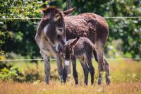 Idée de Sortie Vensac Culture d'âne