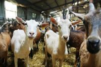 Idée de Sortie Maisonnais La Chèvrerie des sept chemins