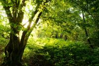 Idée de Sortie Escombres et le Chesnois Bois de L'Aire aux Oiseaux, au coeur d'une forêt millénaire