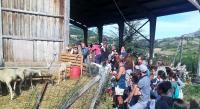 Idée de Sortie Paulhe Ferme de Pinet, visite d'un élevage de brebis en agroécologie