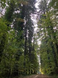 Evenement Le Mont Dieu Découverte des pouvoirs de la nature : la forêt