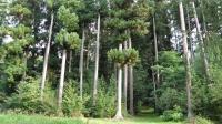 Idée de Sortie Saint Goussaud Visite guidée de l'Arboretum