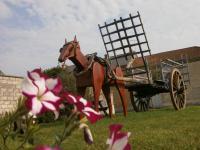 Idée de Sortie Saint Étienne à Arnes LA NEUVILLE EN TOURNE A FUY, Village Fleuri 2 Fleurs