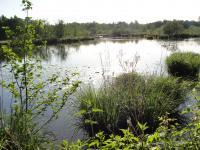 Idée de Sortie Arbigny Réserve Naturelle de La Truchère-Ratenelle