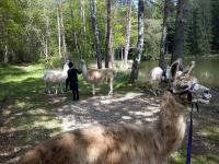 Idée de Sortie Maussac La Ferme de Lama'zière