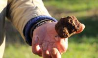 Evenement Saint Germain des Bois Marché aux truffes