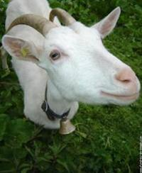 Idée de Sortie Harcy Fromage de chèvre