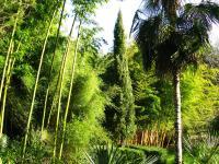 Idée de Sortie Saint Chamassy Jardin les Bambous de Planbuisson