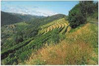 Idée de Sortie Le Fel Les Terrasses du Haut-Mindic (Vins d'Entraygues - Le Fel)