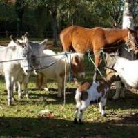 Evenement Centre Foire aux chevaux, brocante