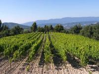 Idée de Sortie Le Puy Sainte Réparade Centre d'art Tadao Ando - Château La Coste