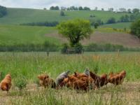 Idée de Sortie Sévérac l'Église Vente d'oeufs frais de la ferme - Vidal Roland