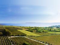 Idée de Sortie Lançon Provence Le vignoble de l'Etang, un vignoble des contrastes