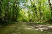 Evenement Fouchères Les secrets de la forêt