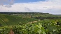 Idée de Sortie Plaines Saint Lange Point de vue : Paysage de Champagne