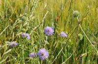 Idée de Sortie Le Subdray L'Espace Naturel Sensible : « Chaumes du Patouillet »