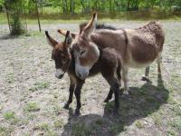 Idée de Sortie Darbres Parc animalier de Lussas