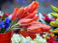 Marché, un Vide Grenier ou une Brocante Cassis Marché aux fleurs Estrangin