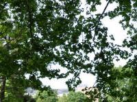 Parc de la Mirabelle Fontvieille