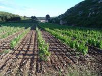 La Venise Provençale, cave viticole Martigues