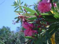 Parc du Gour Martigues