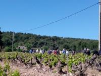 Sentier des vignerons - Boucle de la Venise Provençale Martigues