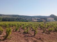 Sentier des vignerons - Boucle des cépages Martigues