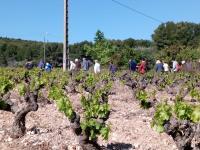 Sentier des vignerons - Boucle panoramique Martigues