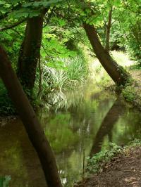 Idée de Sortie Maussane les Alpilles Bouches-du-Rhône en Paysages - Maussane, au fil de l'eau