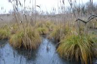 Evenement Liourdres Zones Humides: Réservoirs de Biodiversité