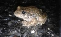 Evenement Pinsac La Vie Amphibienne nocturne
