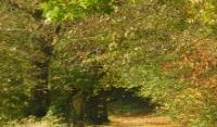 Arboretum forestier des Deux-Sèvres Deux Sèvres
