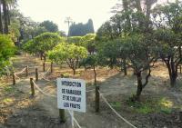 Idée de Sortie Roquebrune Cap Martin Jardin d'agrumes du Palais de Carnolès - Jardin public