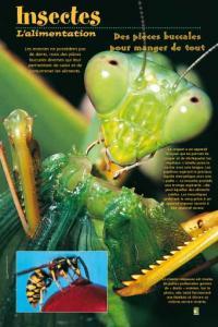 Evenement Vailly sur Aisne Expo : Insectes, une extraordinaire diversité