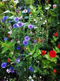 Idée de Sortie Marcilly le Hayer Jardin Botanique de la Brisatte