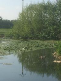Idée de Sortie Saint Outrille Pêche dans le ruisseau du Meunet