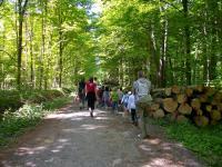 Idée de Sortie Cartigny l'Épinay Promenons-nous dans la forêt de Cerisy !