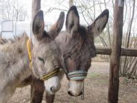 Bouz'âne-Credit-Florence-Roy--OTvalleedelacreuse-36-unenaturealetatpurtenterlexperience-2-florenceroy-fr-Florence-Roy